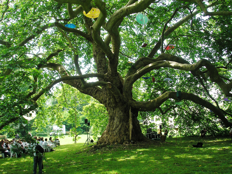 la charte de l 39 arbre le d veloppement durable sur le territoire du grand lyon. Black Bedroom Furniture Sets. Home Design Ideas