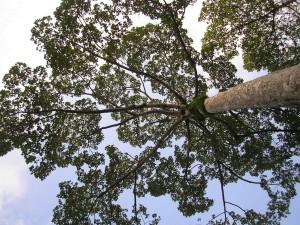 Francis Hallé à Lyon pour nous parler des arbres…