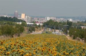Regards sur les milieux naturels et urbain de l'agglomération lyonnaise