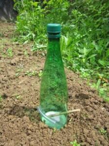 Piège à limace 1 (fond de bière protégé de la pluie)