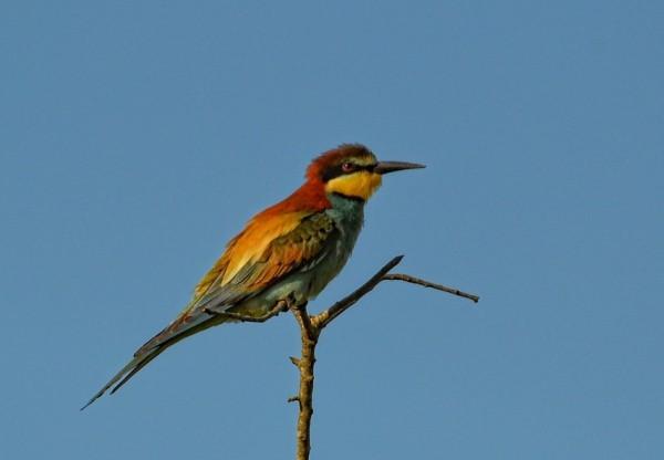 La migration chez les oiseaux
