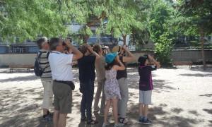 Découvrir les oiseaux du quartier de la Guillotière