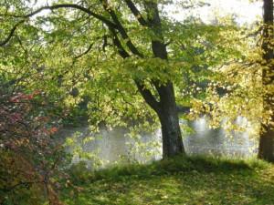 automnelepaa113