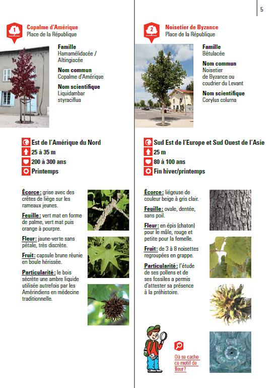 Complètement et trop extrême Au fil des arbres », découvrez la forêt urbaine | Le développement &YT_77