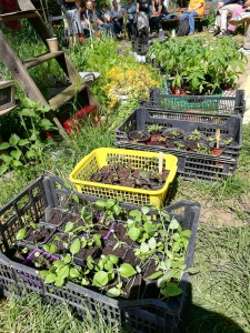 « Jardiner dans la ville » : atelier semis, troc de graines et de plants