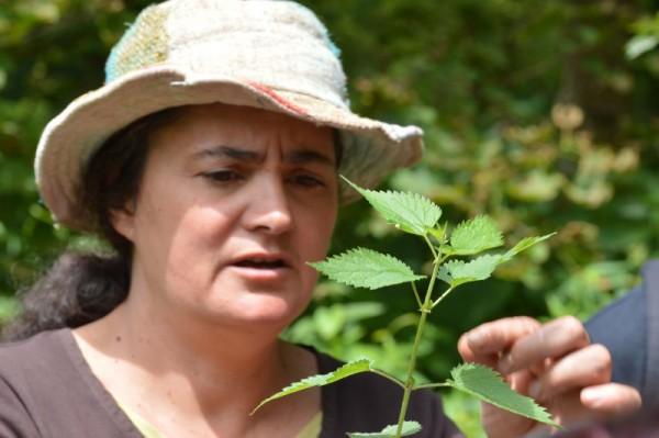 Conférence sur les plantes sauvages comestibles : samedi 29 septembre à 17h