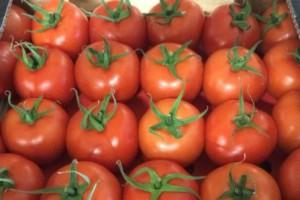 La pédagogie gustative, ou l'éducation au goût comme levier de la transition alimentaire