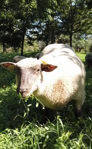 L'herbe est plus verte dans les parcs de la Métropole de Lyon !