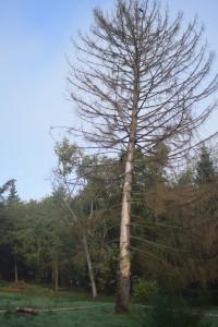 3 000 arbres plantés au parc de Parilly : mobilisation et sensibilisation des jeunes citoyens