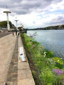 Berges du Rhône à Lyon : Quand la nature reprend ses droits !