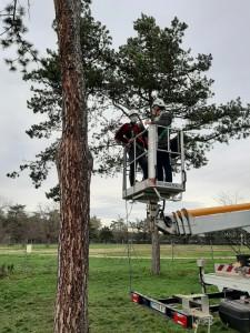 Découvrez au Parc de Parilly une opération d'envergure de pose de nichoirs pour lutter contre la chenille processionnaire