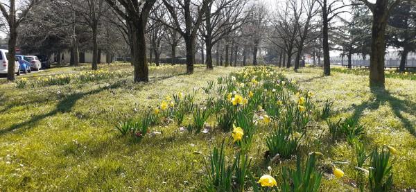 Tapis fleuris au parc de Parilly