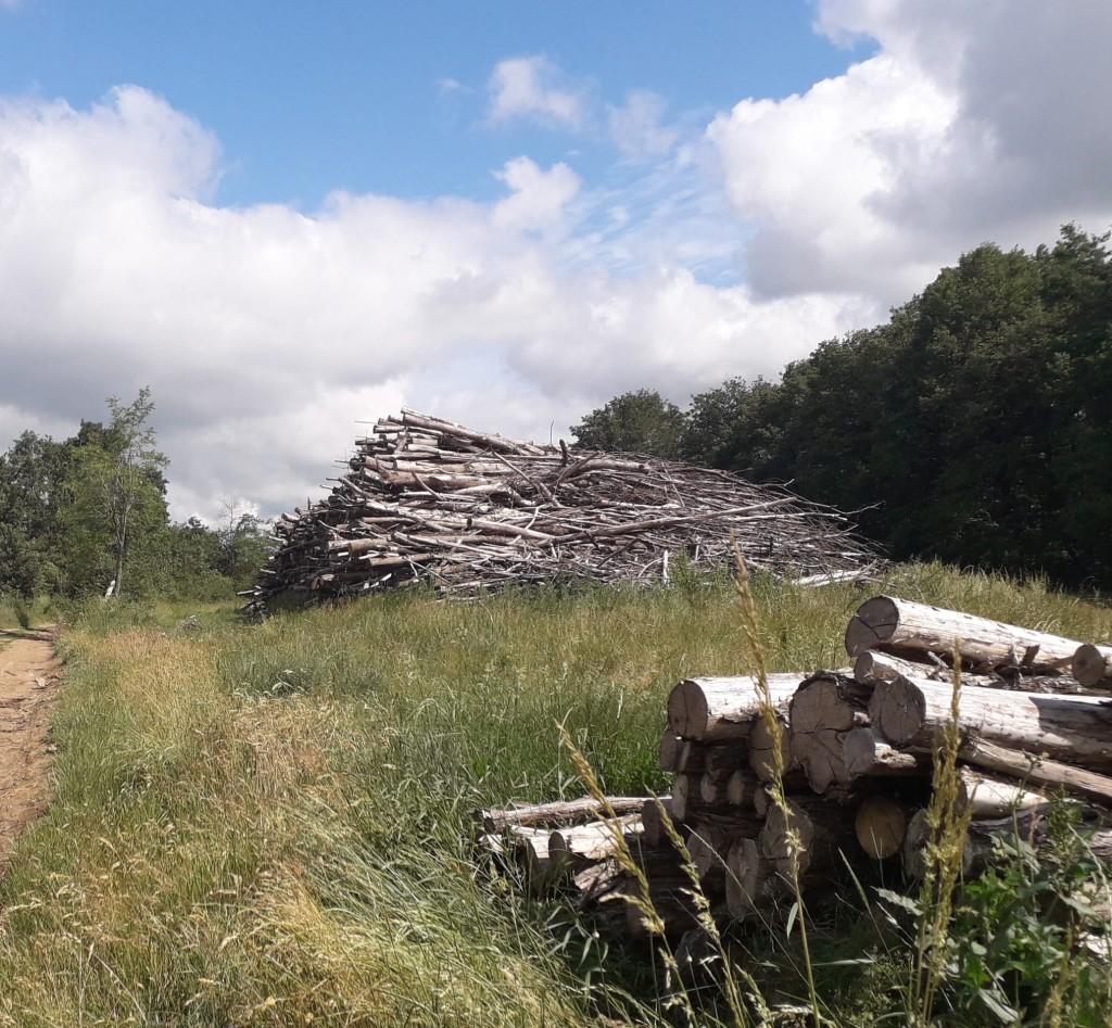 A l'orée de la forêt de Bonnevaux-bas dauphiné, une coupe récente a permis d'extraire des arbres pour faire des piquets de clôture (au premier plan)  et du bois-énergie avec les troncs mons intéressants (le camion viendra déchiqueter le bois sir place)